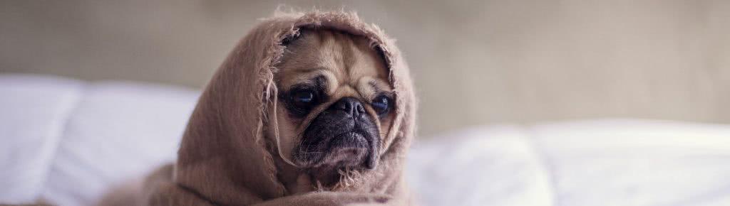Adopcja zwierząt – najciekawsze kampanie video